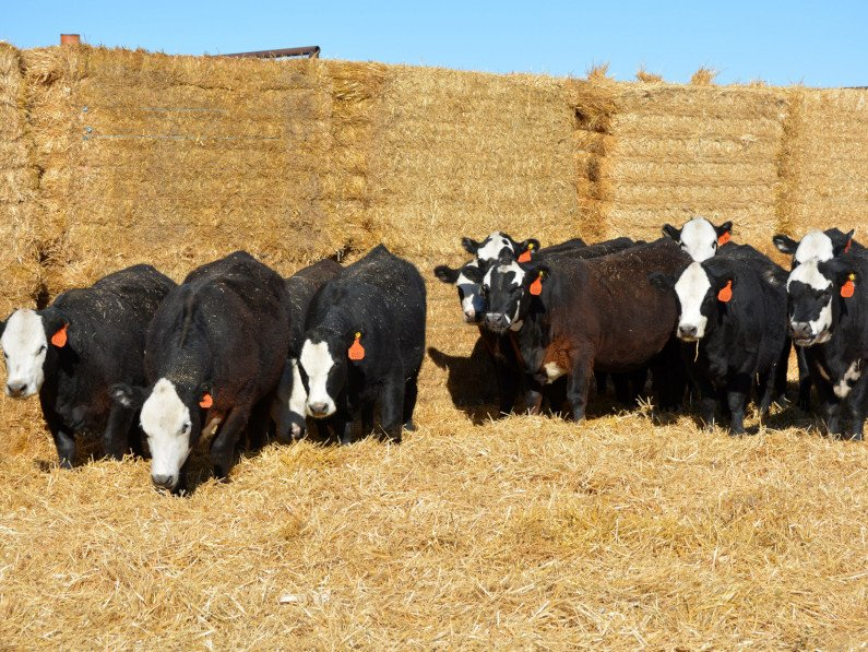 NJW Hereford Production Sale
